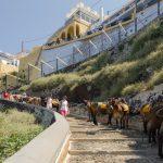 Donkeys at Santorini old port